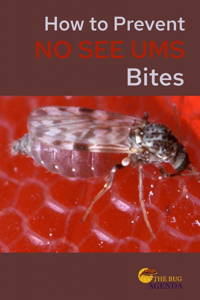 how to prevent no see um bites
